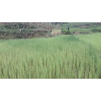Land for Sale in Godavari -2.